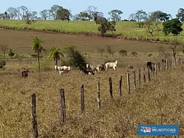 Foram recuperadas um total de 26 cabeças de gado leiteiro e de corte. Fotos: POLÍCIA CIVIL/Divulgação
