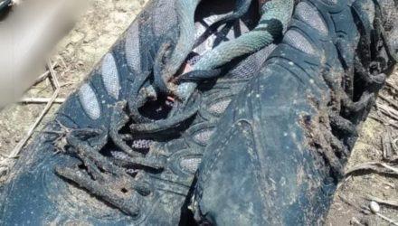 Tênis foi encontrado com ossada e polícia de Costa Rica (MS) suspeita que seja de um homem. — Foto: Divulgação/Polícia Civil.