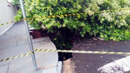 Cratera abriu e engoliu árvore após galeria pluvial estourar durante chuva forte em Andradina (SP) — Foto: Defesa Civil/Divulgação