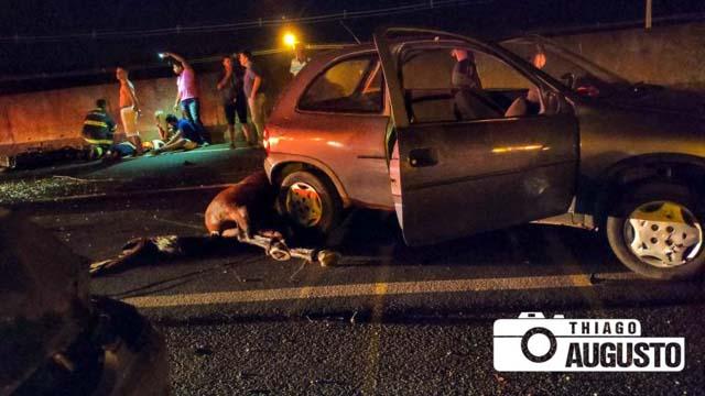 Cavalo envolvido no acidente morreu na hora. Foto:Thiago Augusto