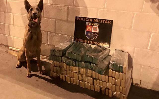 As três caixas de papelão que continham maconha foram localizadas pelo cão Thor, da PM — Foto: Cedida/Polícia Militar