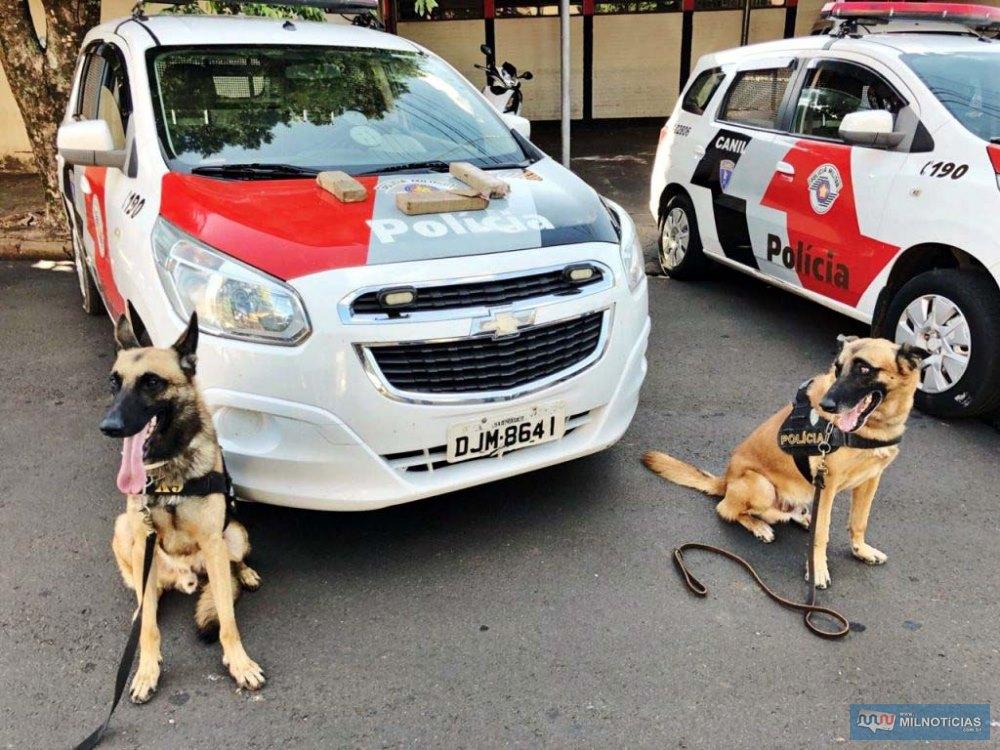 Cães farejadores encontraram grande quantidade de droga enterrada no quintal. Foto: DIVULGAÇÃO/PM
