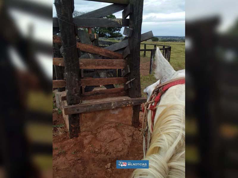 Embarcadouro teve as tábuas cerradas para o furto do gado. Foto: DIVULGAÇÃO