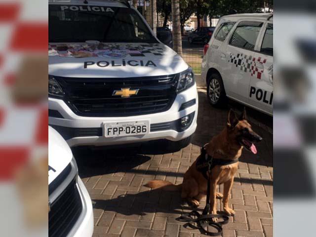 Cão de faro Aragon, do Canil do Baep de Araçatuba. Foto: DIVULGAÇÃO/PM