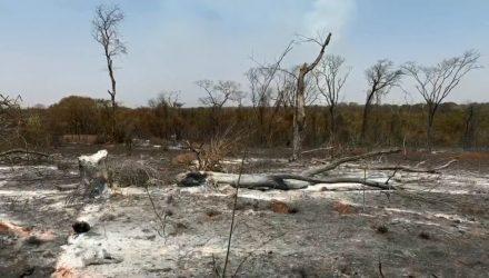 Queimada atinge parque estadual e ameaça espécies no interior de São Paulo — Foto: Reprodução/TV TEM