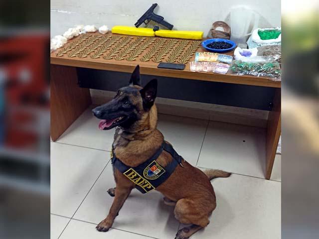 Cão Ragnar com entorpecentes e objetos apreendidos. Foto: Aracatubaemfoco