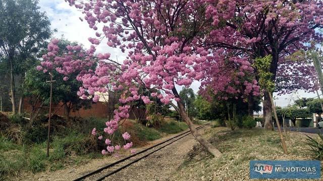 Autor escolheu trecho da linha férrea para praticar os furtos entre a área urbana de Andradina e o patrimônio de Planalto. Foto: MANOEL MESSIAS/Agência