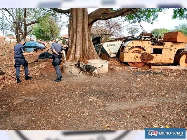Equipe do canil do BAEP de Araçatuba foi utilizada na operação conjunta. Foto: DIVULGAÇÃO/PM